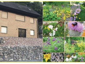 Karge Kiesgärten in Eigenheimsiedlungen befördern die Aufheizung einer Stadt